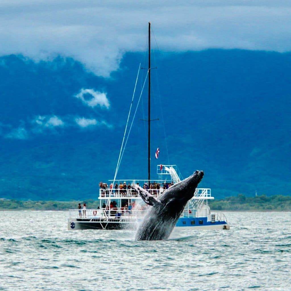 while our catamaran tour, humpback breaching