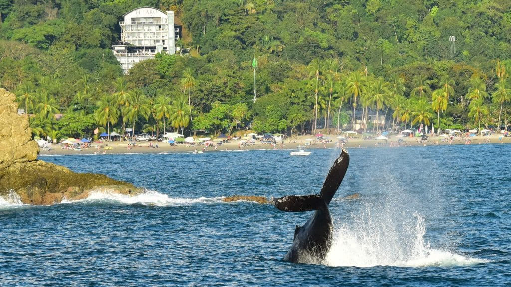 Humpback whale tail in front of Manuel Antonio National Park