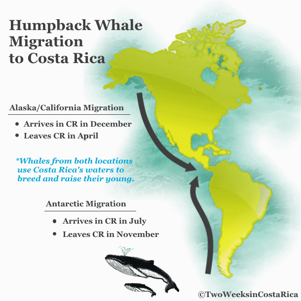 route of humpback whales migration