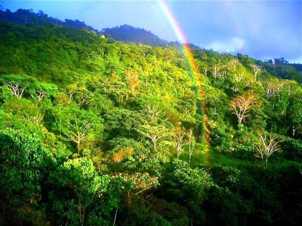 Wildlife of Costa Rica